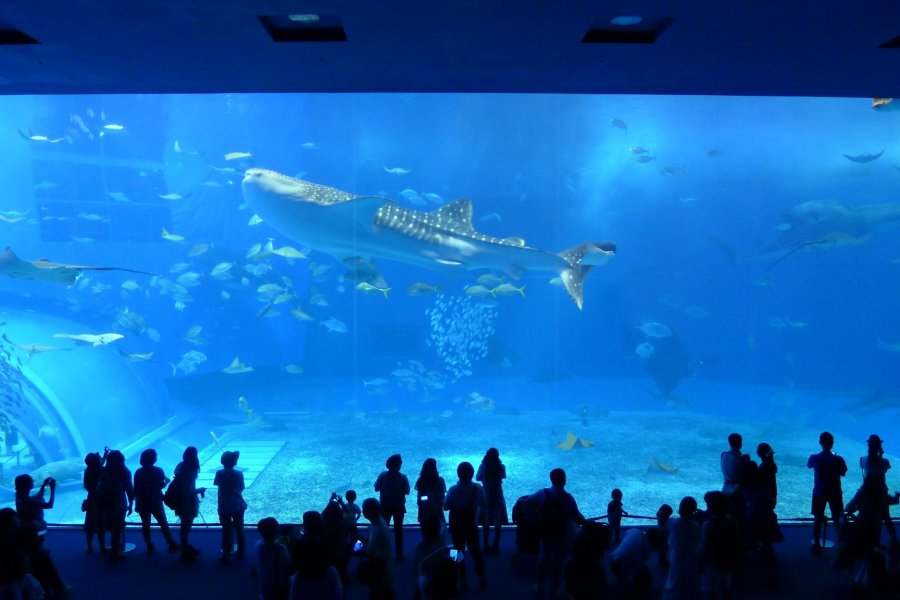 L'Aquarium Churaumi d'Okinawa